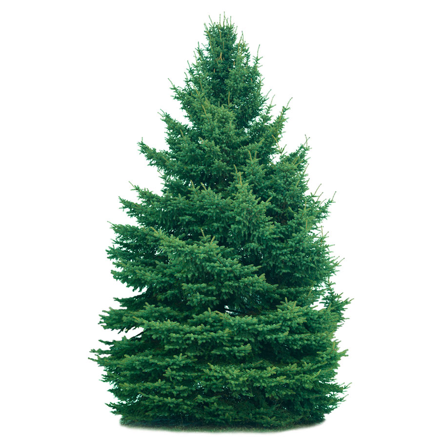 Nyc Christmas Tree Delivery: Online Christmas Trees For Sale